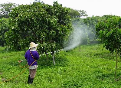 the effects of pesticide use essay
